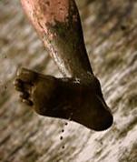 muddy feet 2[1]