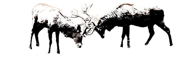 battling-deer-decal