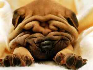 sad-puppy-face[1]